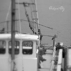 漁港の鳥.jpg